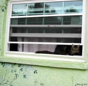 Cat-on-windowsill